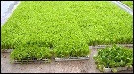 piante in contenitori di polistirolo