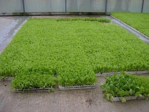 Assortimento di piante per orto