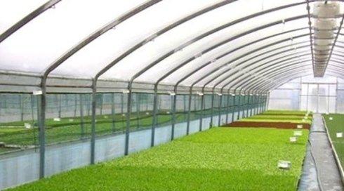 Assortimento di piante per giardini