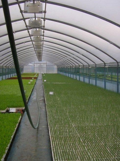 Vasto assortimento di piante in serra