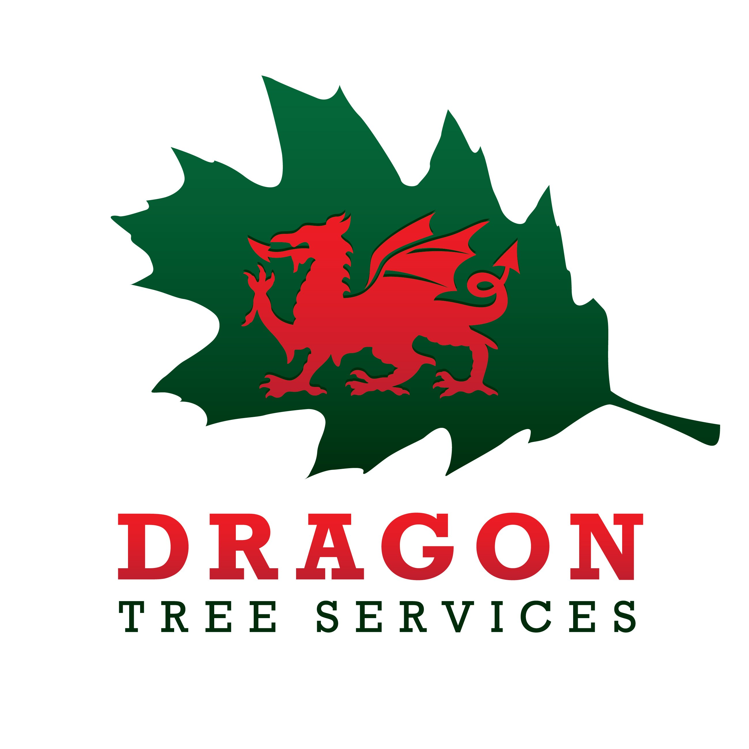 Dragon Tree Services provide all aspects of tree surgery throughput North Wales from Caernarfon, Bangor, Anglesey, Llanberis, Conwy, Betws y Coed, Pwllheli and all areas inbetween.