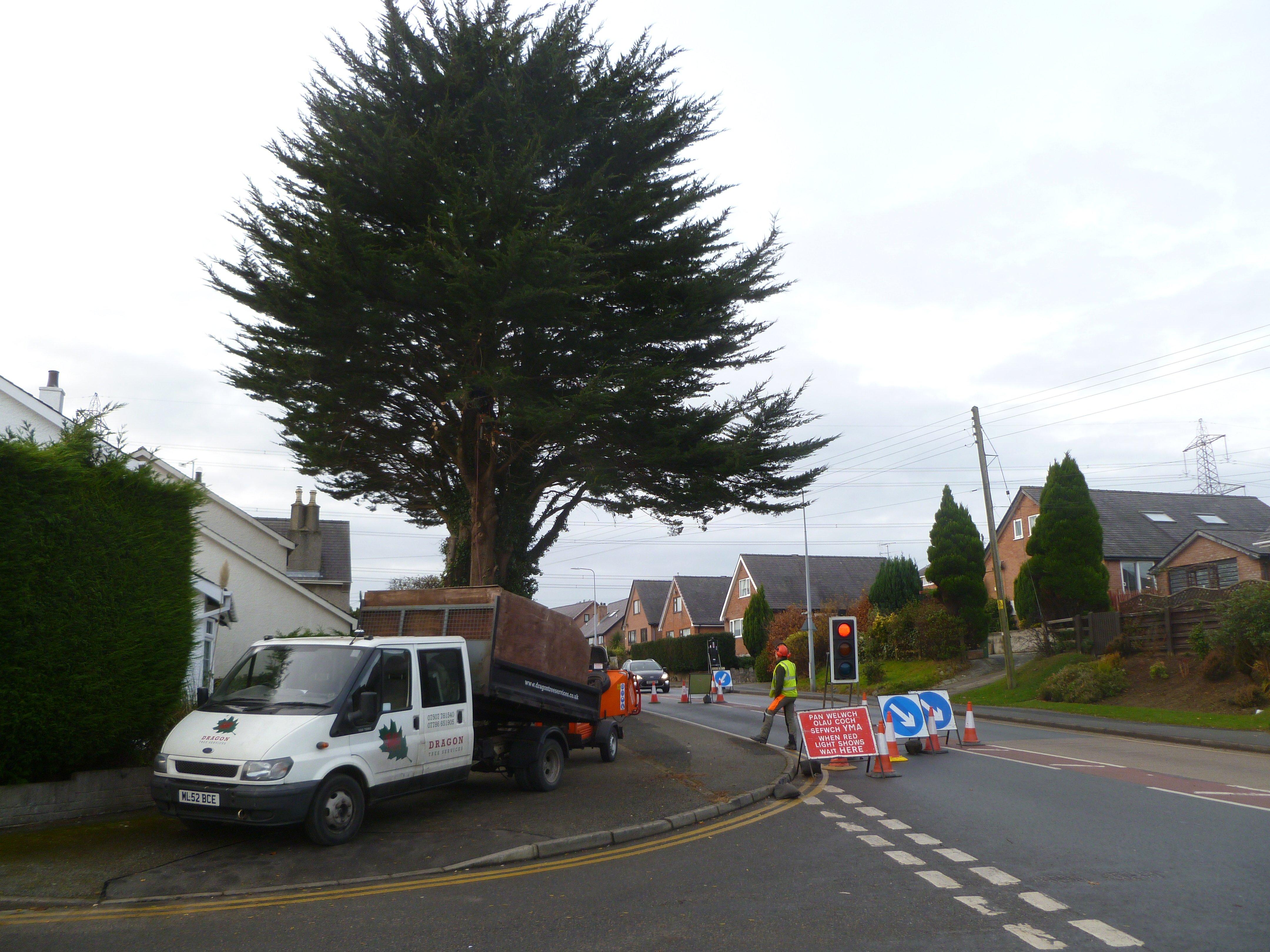 Sectional dismantling a Macrocarpa in Bangor, North Wales.