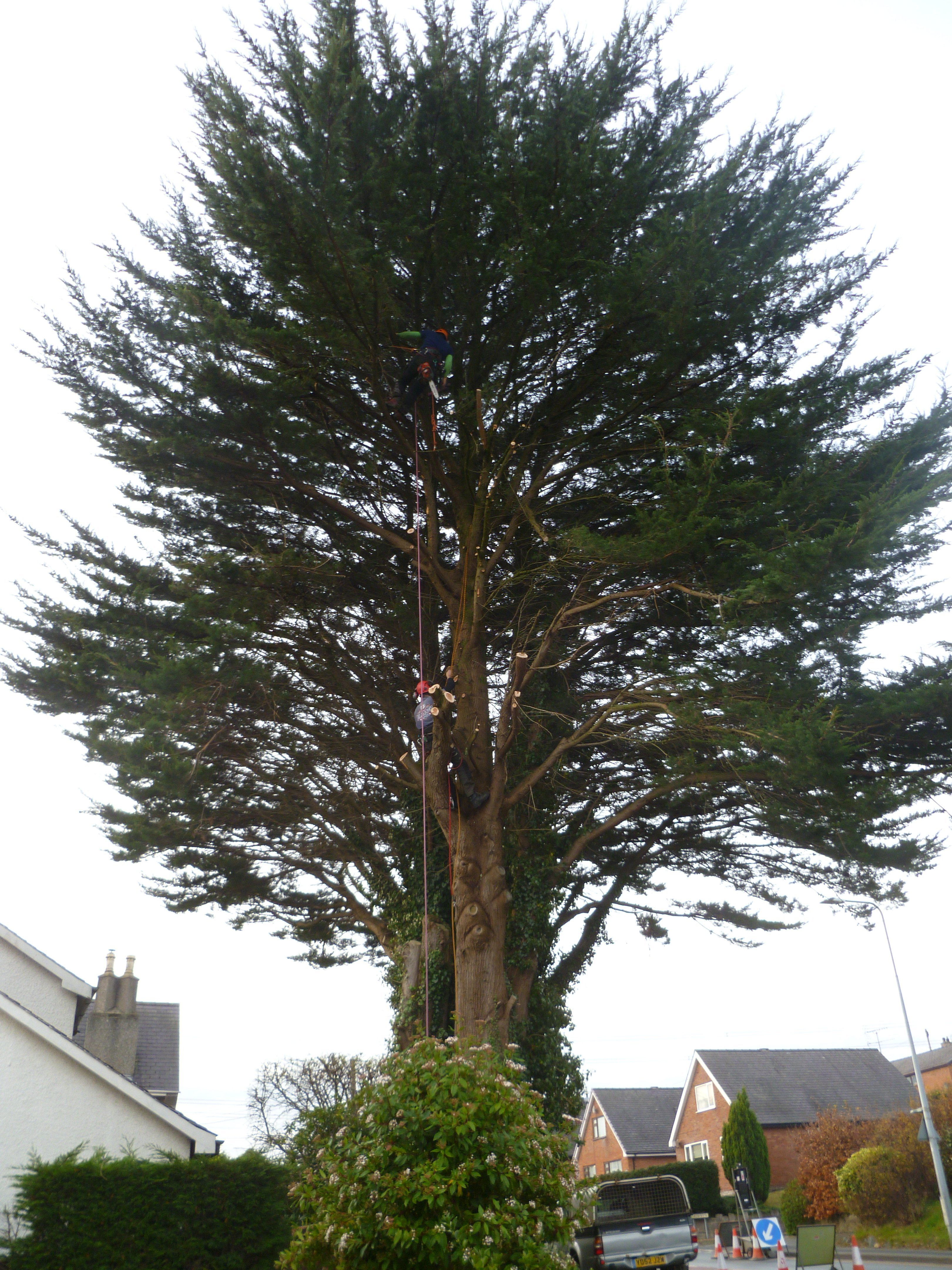 There is a tree surgeon in tha Macrocarpa tree somewhere.