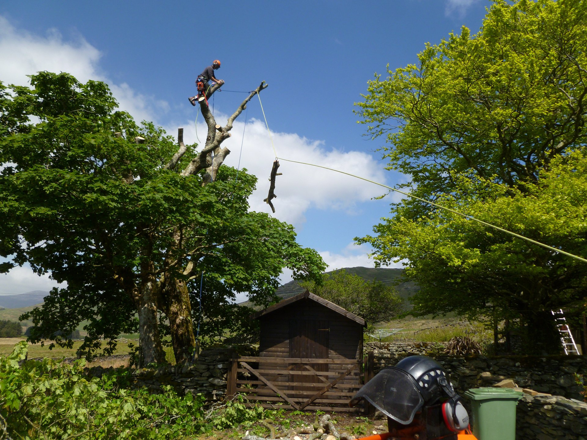 A lovely sunny North Wales day for tree surgery.