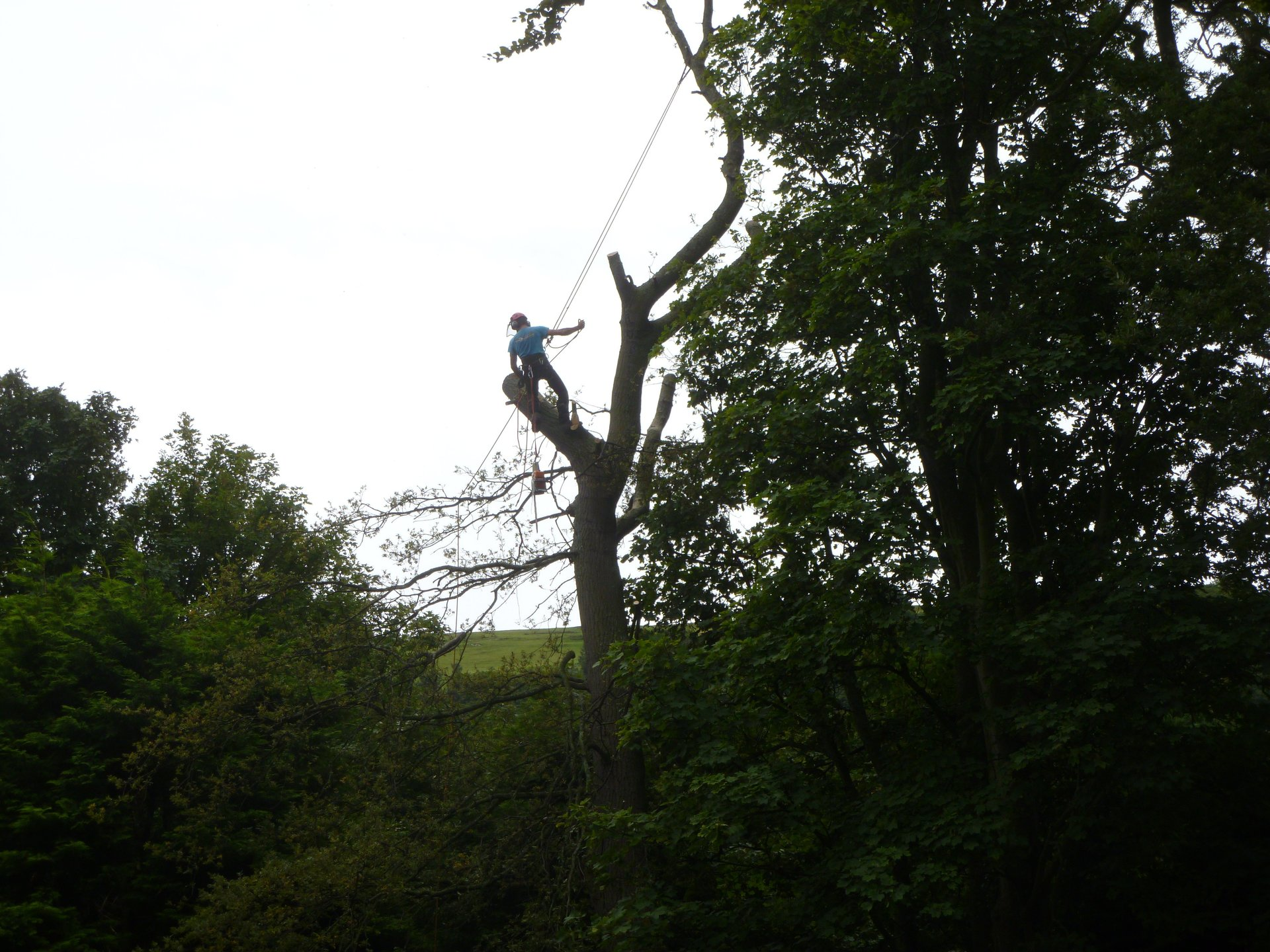 Tree surgeon just hanging out.