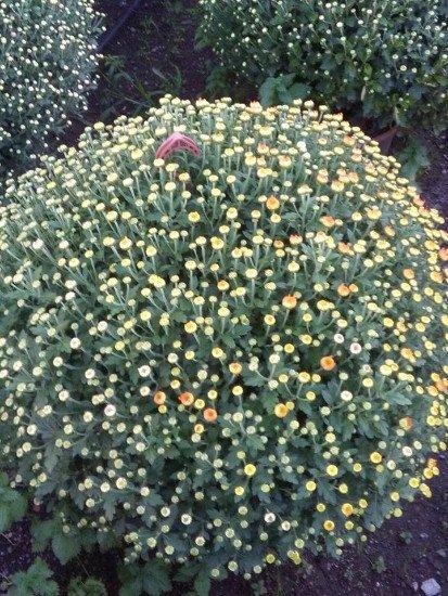 Un cespuglio con dei fiori gialli