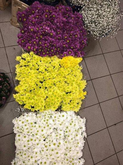 Fiori di color viola, giallo e bianco