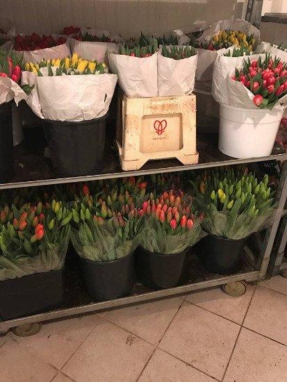 dei vasi di fiori in uno scaffale di ferro