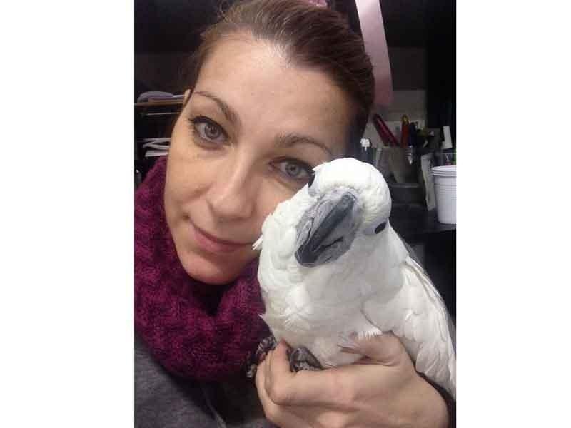 Vendita pappagalli