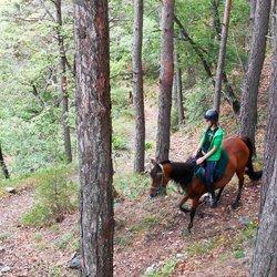 uan persona a cavallo nel bosco