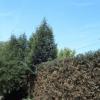 siepi, alberi, potatura siepi