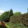 manutenzione alberi, manutenzione siepi, pini