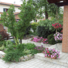 fiori, alberi, manutenzione alberi