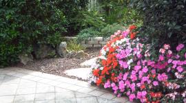 fiori, giardino, manutenzione giardini