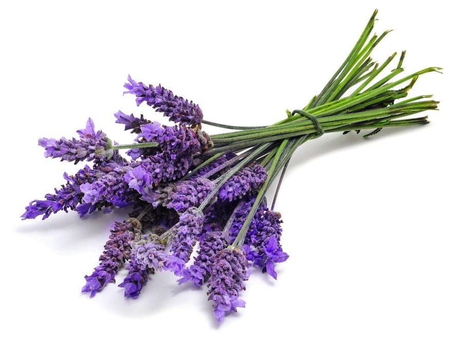 OMS Lavender