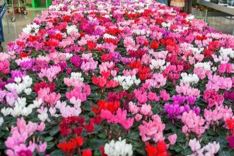piante ornamentali per interno ed esterno