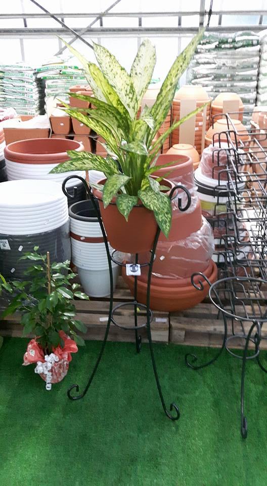 una pianta verde in un vaso esposta su un porta vaso in ferro battuto e dietro un insieme di vasi di diversi tipi e dimensioni