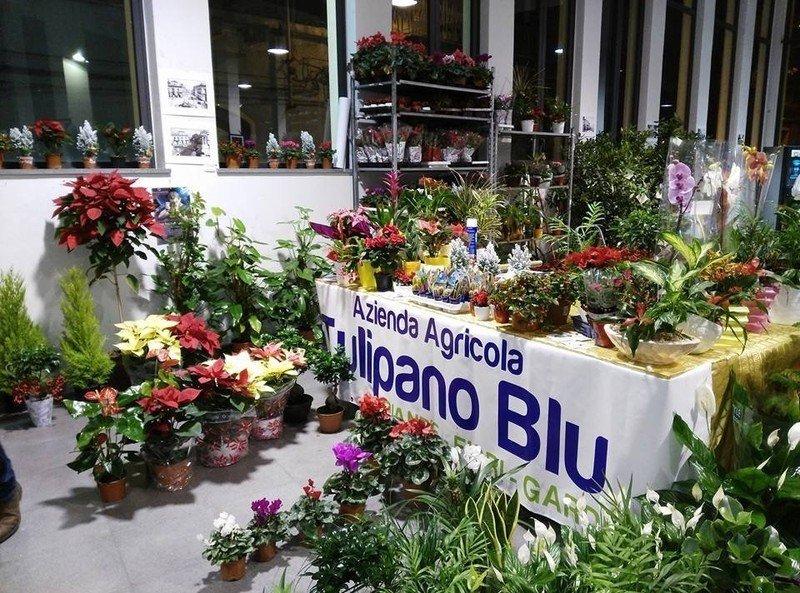 piante colorate esposte per terra e su un tavolo con un striscione pubblicitario di azienda agricola tulipano blu