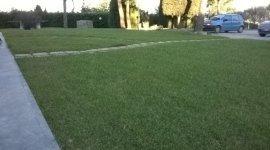 manutenzione giardini, impianti fitodepurazione, messa in sicurezza piante