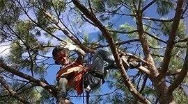 Tree climbing, corsi di potatura