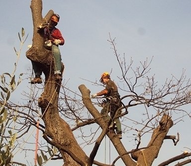 tree climbing, potature alberi, potature piante alto fusto