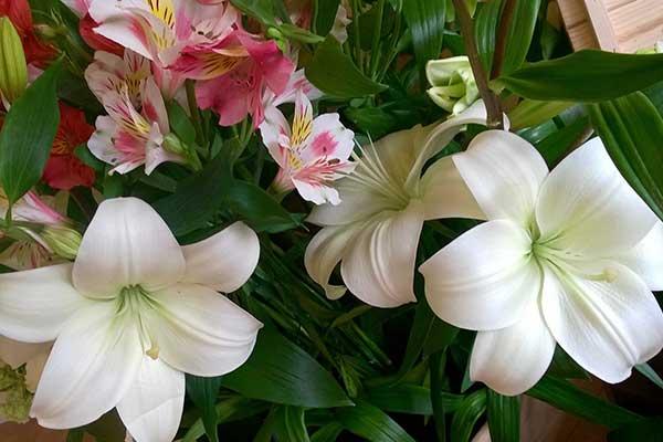 Composizione di piante e di orchidee di color rosa e altri fiori bianchi