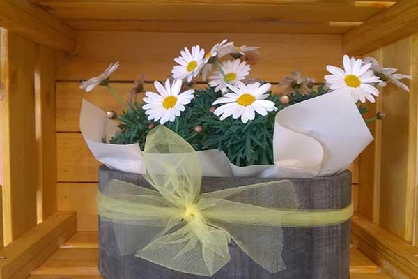 Una cassetta di legno con all'interno un vaso grigio di margherite