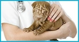 visite domicilio veterinarie