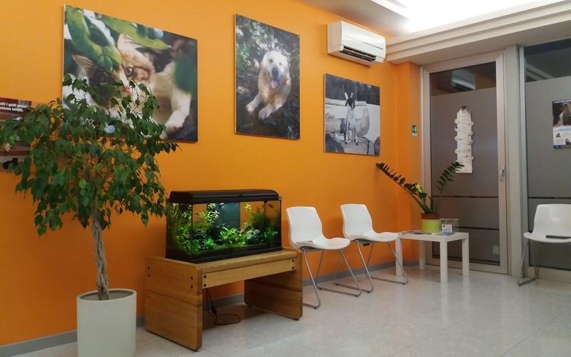 sala di attesa clinica veterinaria