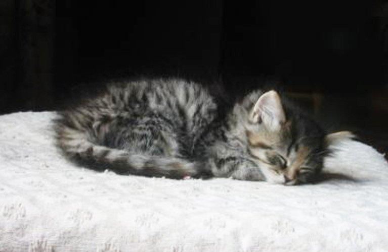 cardiff veterinary hospital kitten
