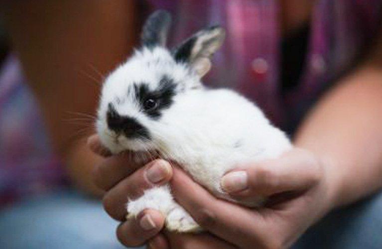 cardiff veterinary hospital rabbit