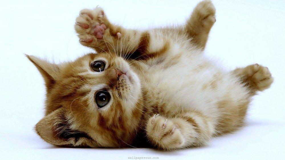 Kitten that got pet vaccinations near Newcastle