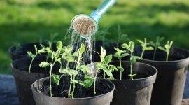 piante da interno, piante da giardino, piante per appartamenti