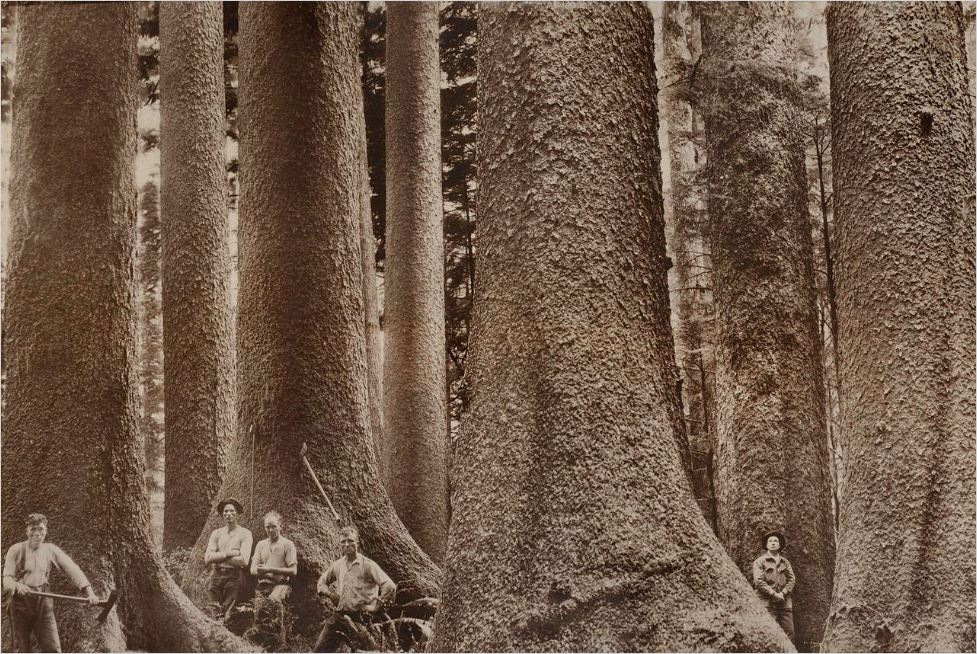Old trees and people near trees