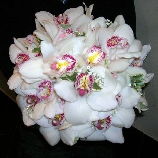 bouquet orchidee bianche
