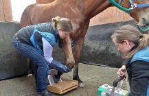 Horse leg check