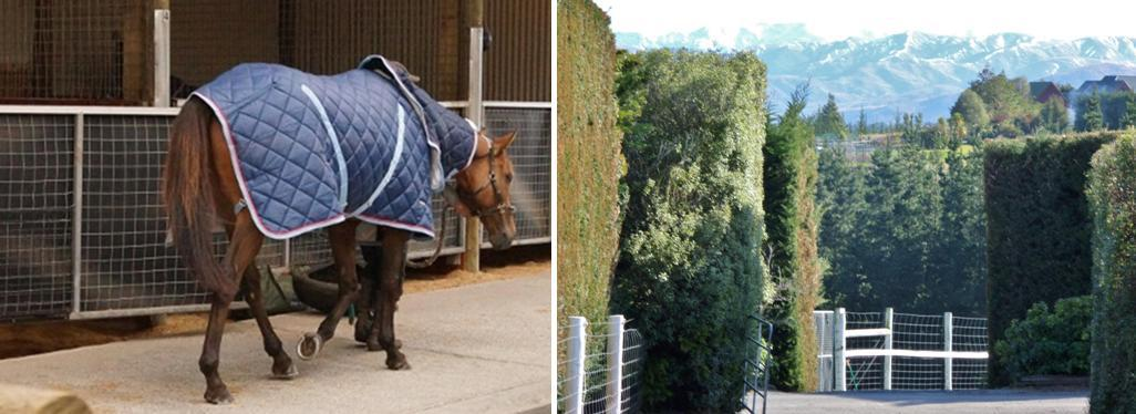 Performance evaluations for horses are provided by Premier Equine Vets and our farm in Riccarton Churchurch