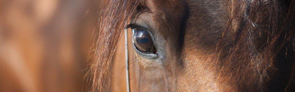 strumenti per la cura del cavallo