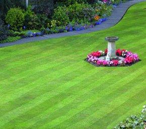 tree-removal-bristol-ajt-garden-services-garden-landscaped