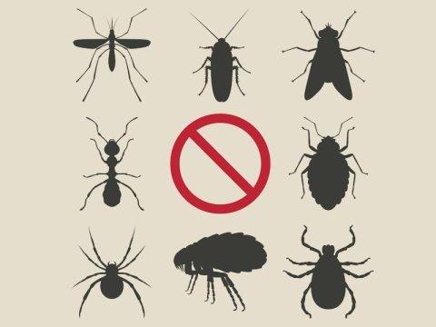 Disinfestazione blatte e zanzare