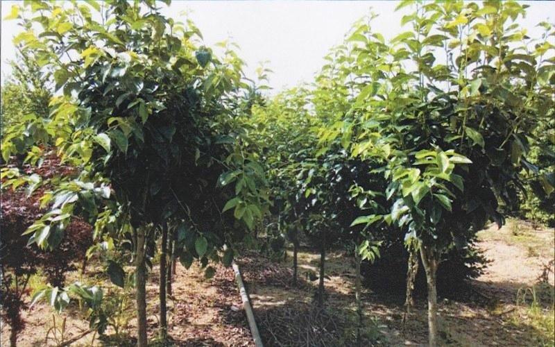 Piante da frutto treviso vivaio piante e fiori di for Alberi da frutto in vaso