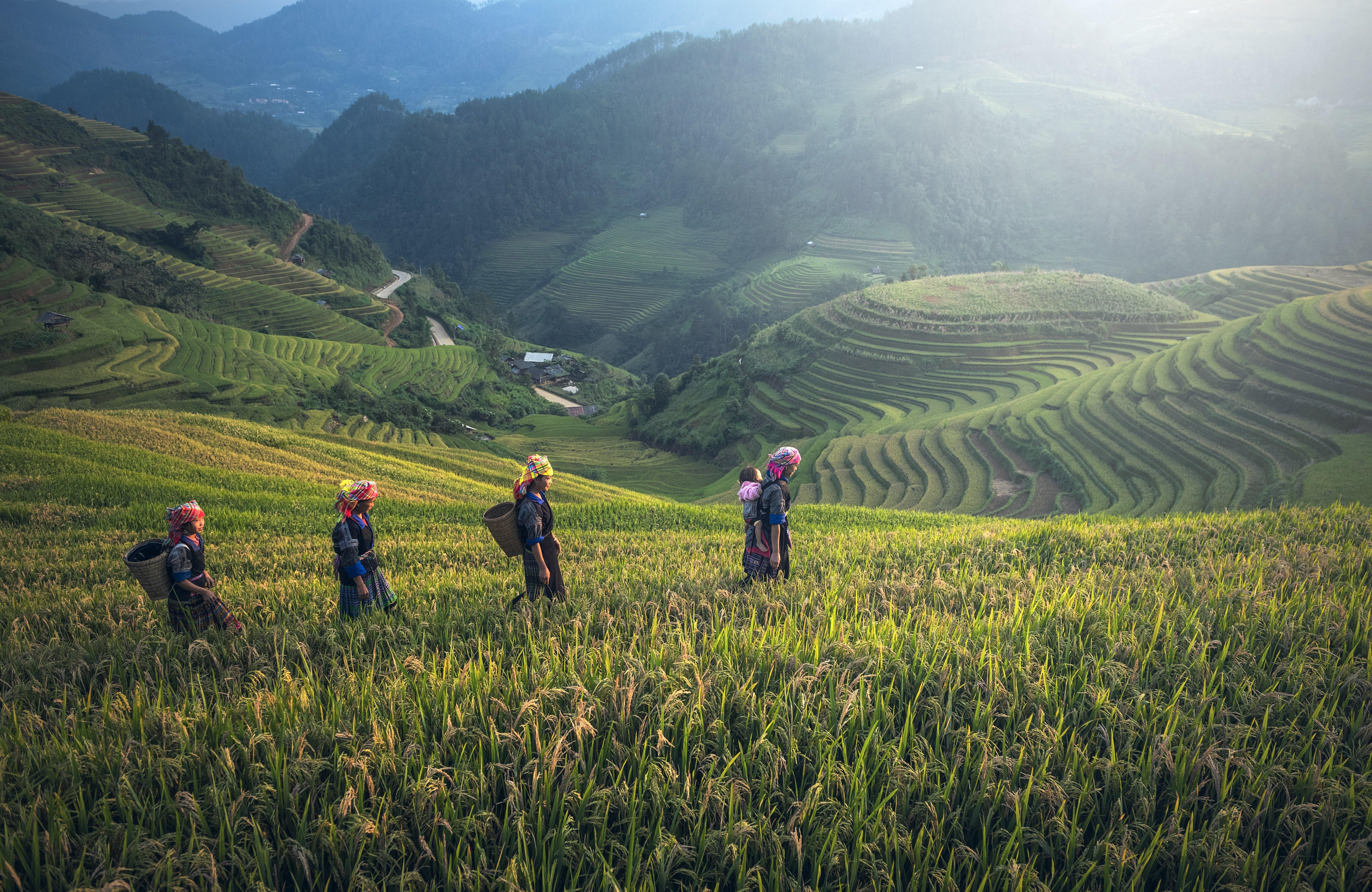 tea, nepal, tea workers
