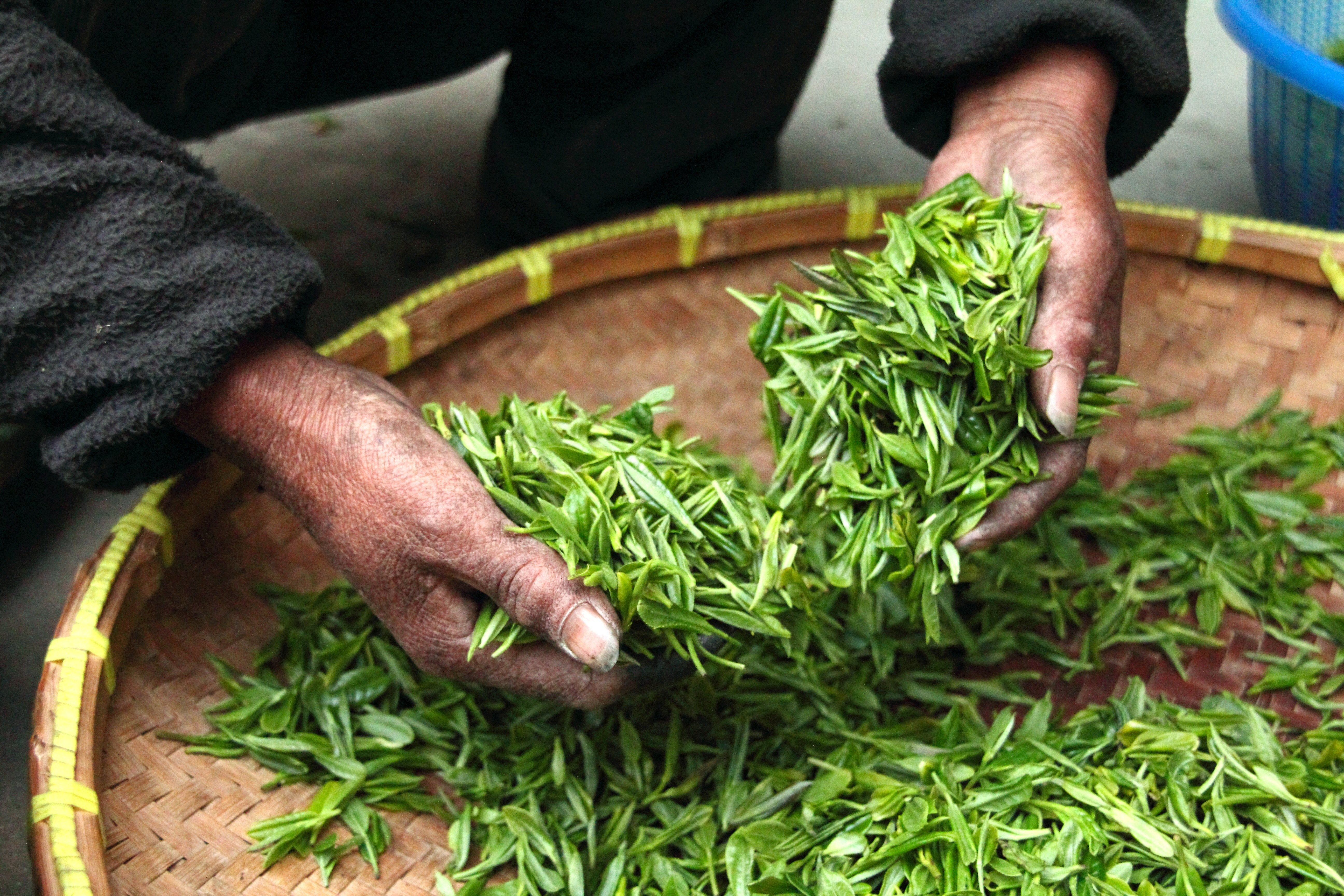 green tea, nepal