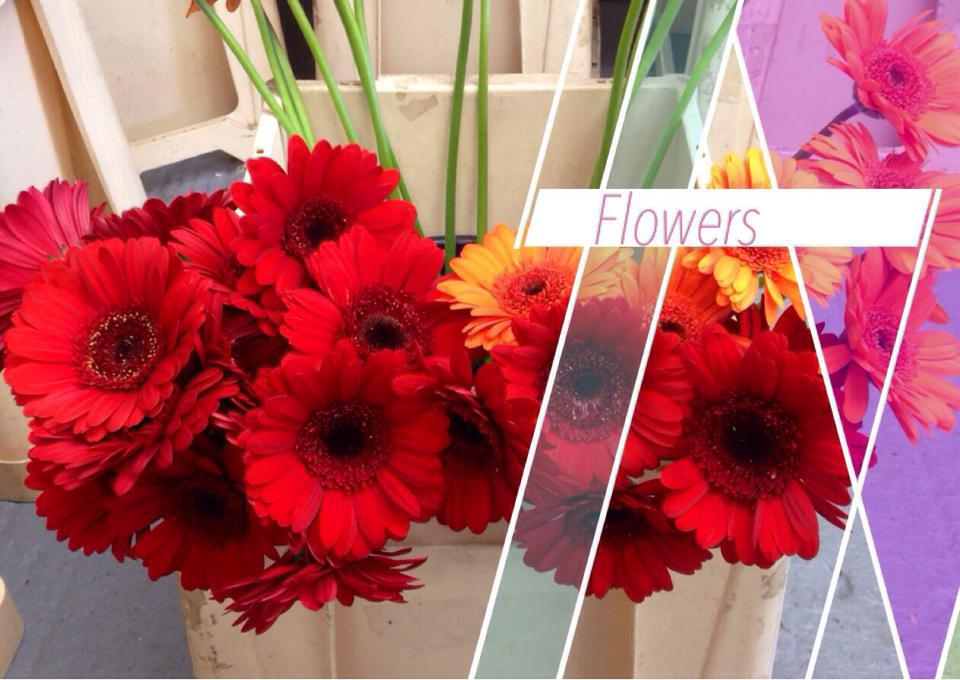 A display of red flowers