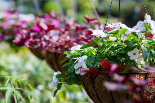 Hanging baskets with flowers in them in Tealing