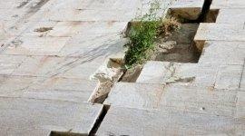 pavimentazione esterna che ga ceduto, grande crepa tra le piastrelle, pianta che spunta dalla fessura