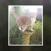 cat on pillar