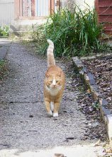 walking cat