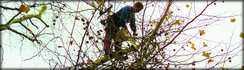 Tree-surgeon---Bedford---Albion-Tree-Surgeons---Testimonial