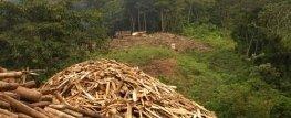 disboscamento e legna da ardere